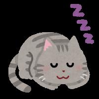 sleep_animal_cat