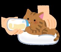 pet_honyubin_cat_utsubuse