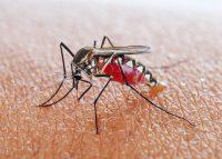 mosquito-609947168
